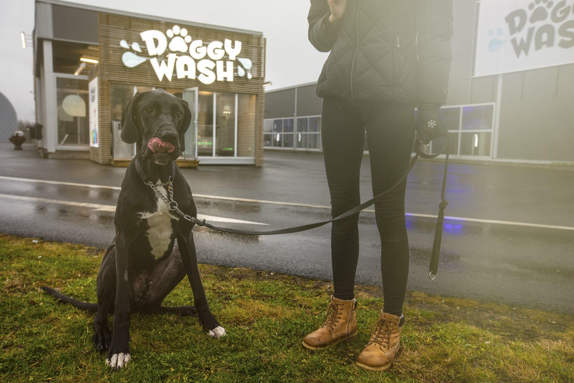 Doggy Wash